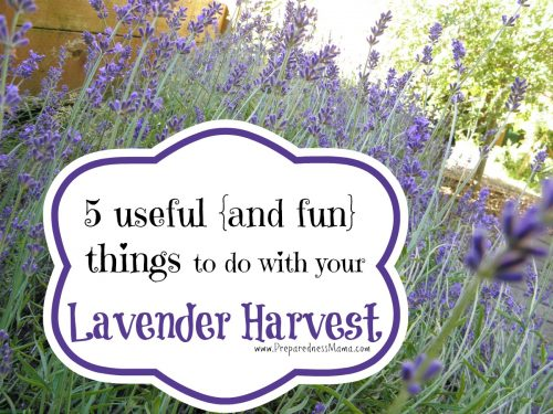 5 Useful and fun things to do with your lavender harvest | PreparednessMama