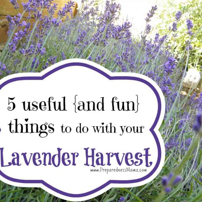 5 Useful and fun things to do with your lavender harvest   PreparednessMama