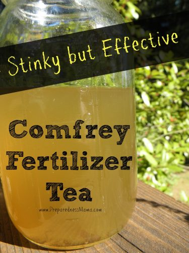 Comfrey Fertilizer Tea takes a few weeks to make but it's worth the wait. it packs a big potassium punch for your garden plants | PreparednessMama