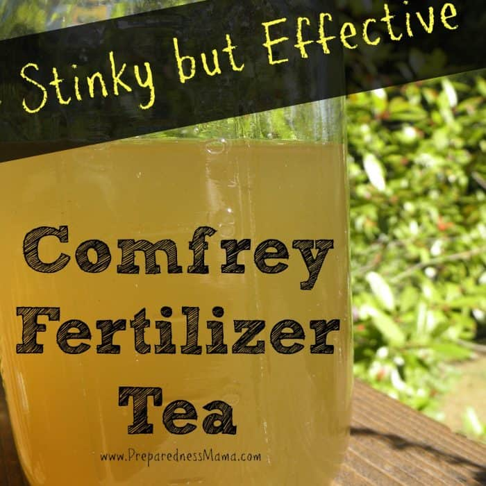 Stinky But Effective – Comfrey Fertilizer Tea