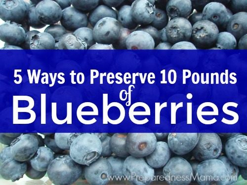 5 Ways to preserve 10 pounds of blueberries | PreparednessMama