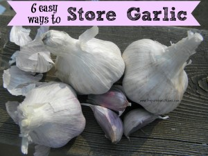 Preserve the harvest: 6 Easy Ways to Store Garlic for the Winter | PreparednessMama