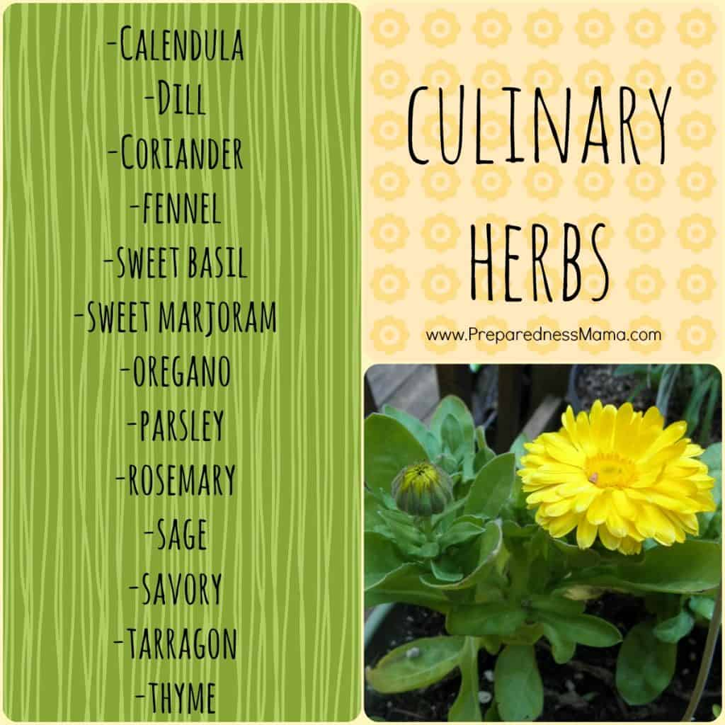 Culinary Herbs at the Herbs are Useful Plants page | PreparrednessMama