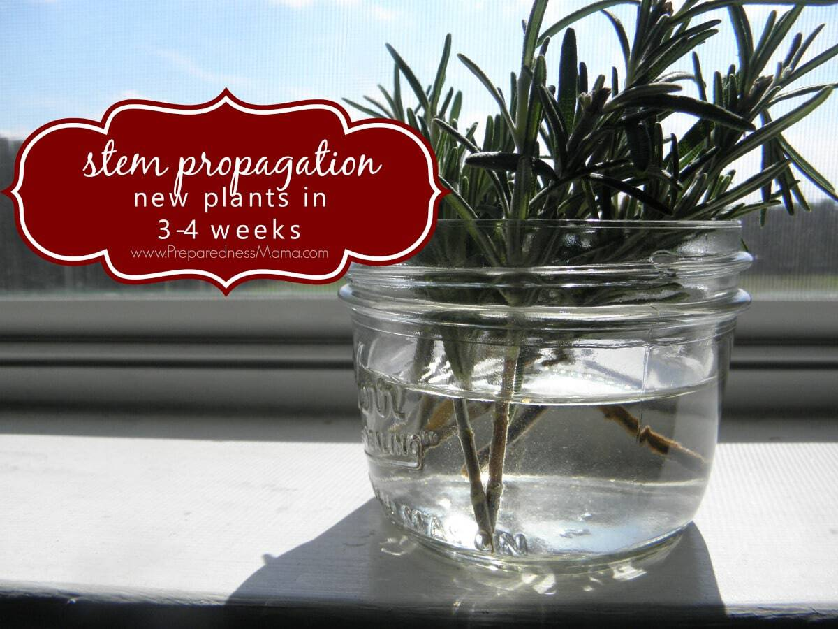 How To Propagate Herbs From Cuttings Preparednessmama