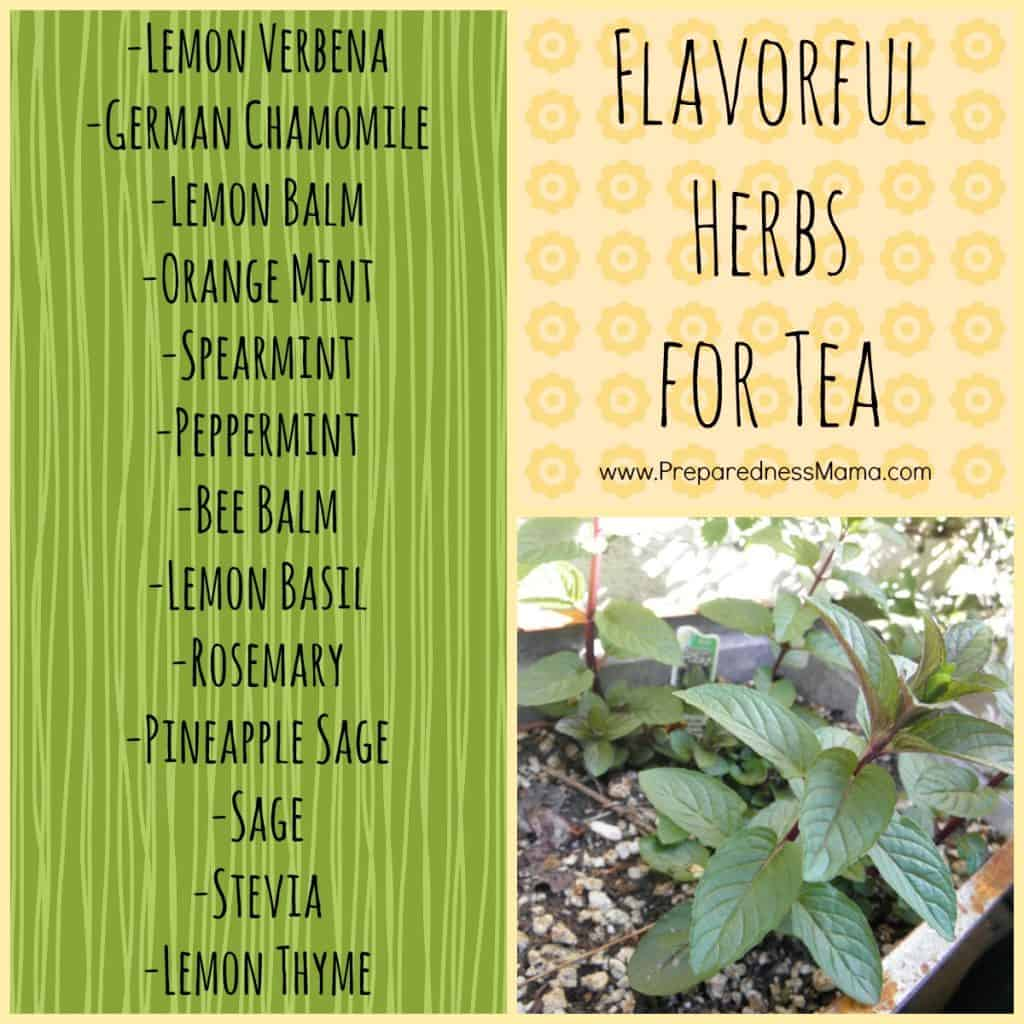 Flavorful Herbs to grow for your own tea | PreparednessMama