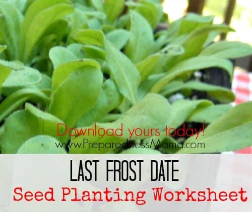 Download the Last Frost Date Planting Worksheet and get a jump on your seed starting schedule | PreparednessMama