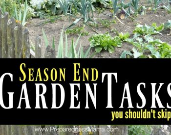 4 Season End Garden Tasks You Shouldn't Skip