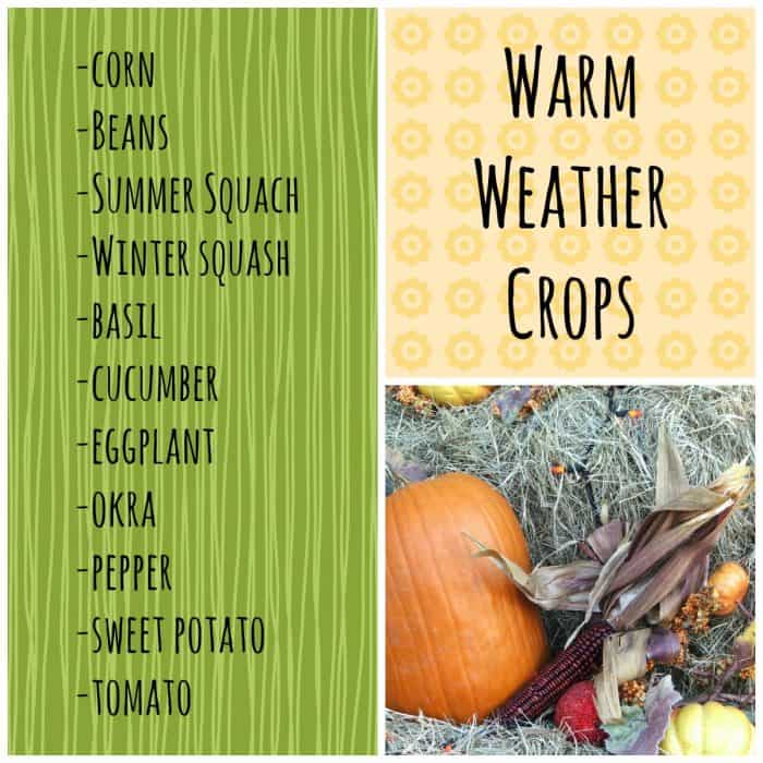 Warm Weather Crops