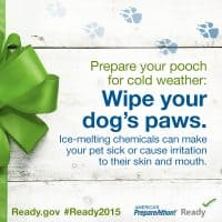 Prepare your pets for cold weather: Wipe your dog's paws, De-icing chemicals can cause sickness | PreparednessMama