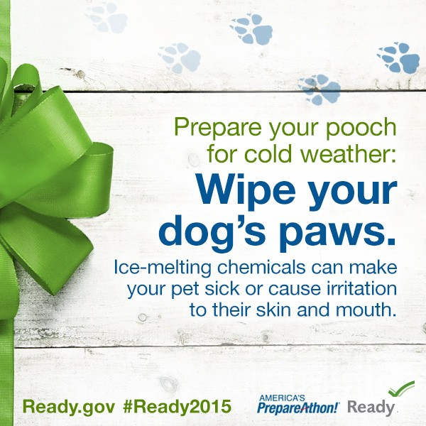 Prepare Your Pet for Cold Weather