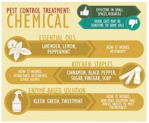 Green pest management Ideas for home and garden | PreparednessMama