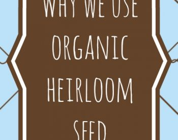 Why we use organic heirloom seeds | PreparednessMama |