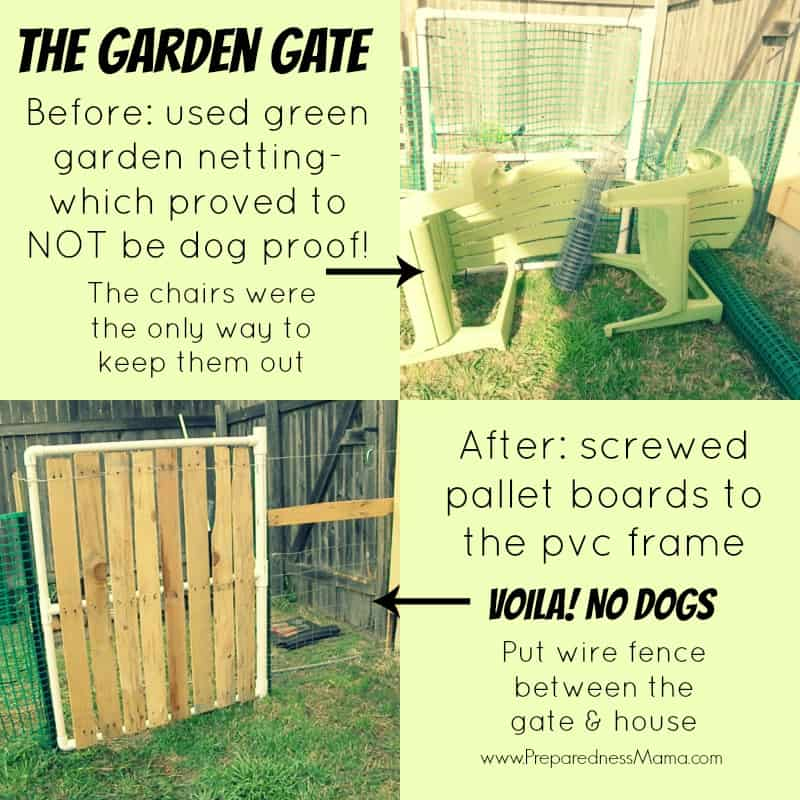 Garden gate before and after. The plastic fencing was no match for the dogs | PreparednessMama
