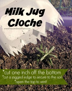 A milk jug cloche can protect your seedlings from heavy rain, wind, and freezing temps | PreparednessMama