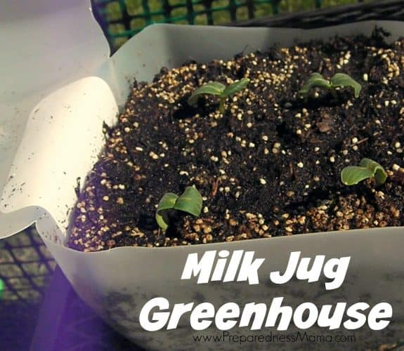 Starting seeds in recycled containers: Milk Jug Greenhouse   PreparednessMama