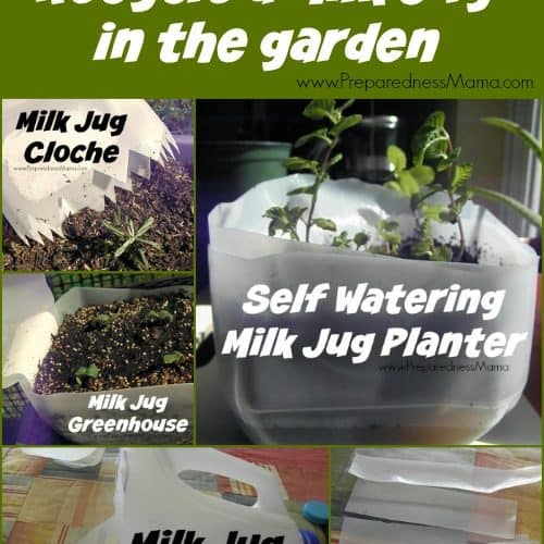 5 Ways to recycle a milk jug in the garden | PreparednessMama