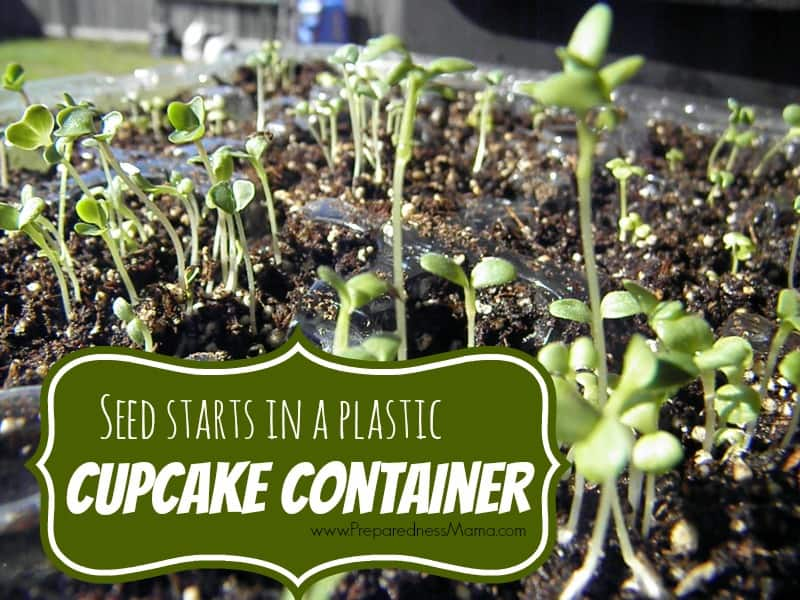 Frugal Seeds Starting: Cupcake Containers with Lids | PreparednessMama