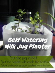 The milk jug self-watering planter might not look like much, but it sure saves time | PreparednessMama