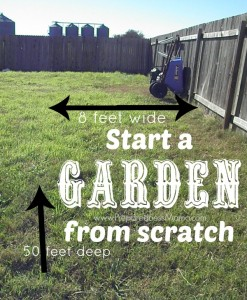 Start a Garden from Scratch. I' have an area 8x50' to work with | PreparednessMama