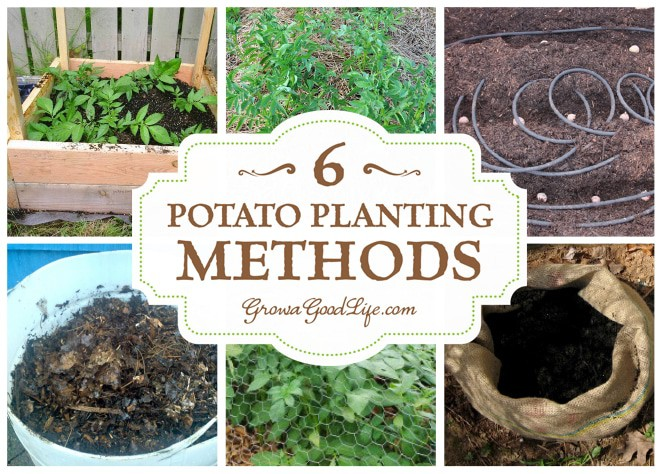 how to grow potatoes what soil is best