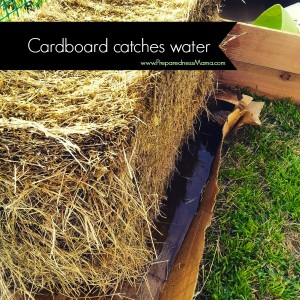 Use cardboard to catch water when conditioning straw bales | PreparednessMama