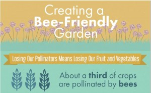 Create a bee friendly garden with this infographic | PreparednessMama