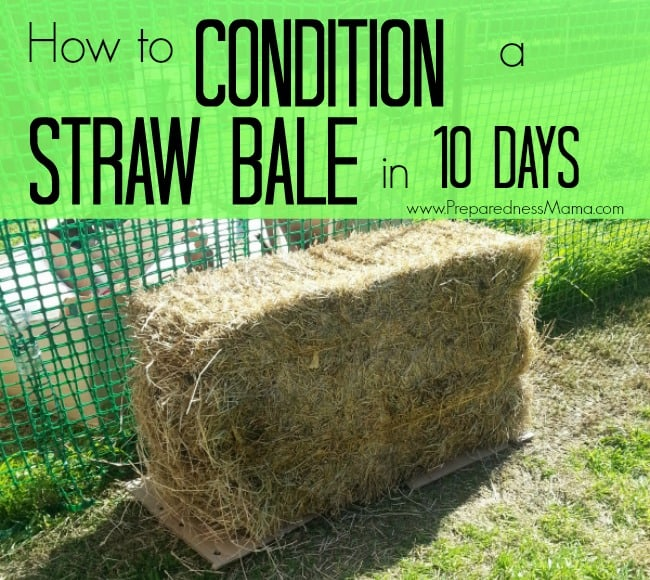 How to Condition Straw Bales by Preparedness Mama - featured at Natural Family Friday
