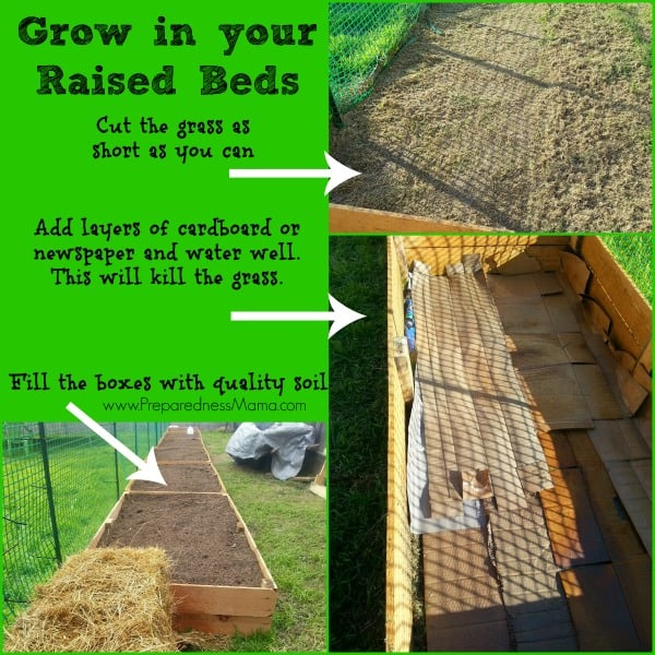 Site preparation for adding raised beds over grass | PreparednessMama