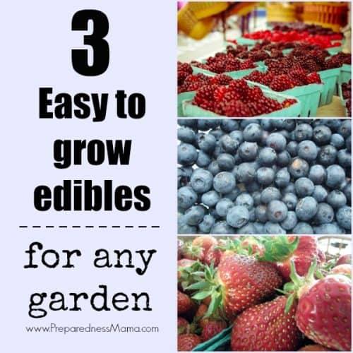 3 easy to grow edibles for any garden | PreparednessMama