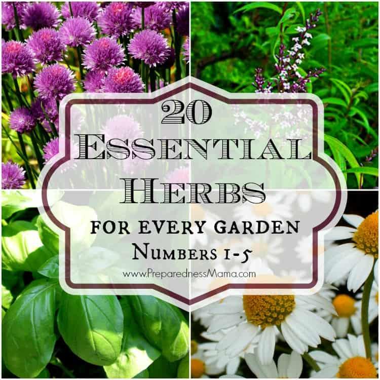20 Essential herbs for every garden #1-5   PreparednessMama