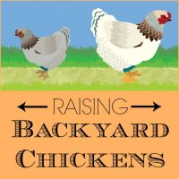 Infographic: Raising Backyard Chickens | PreparednessMama