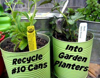 Recycle #10 cans into garden planters | PreparednessMama