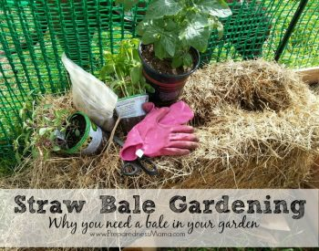 Why you need a straw bale in your garden: Straw Bale Gardening 101 | PreparednessMama