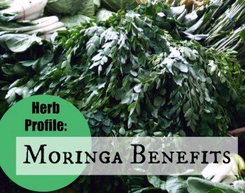 Herb Profile: Moringa Benefits | PreparednessMama.