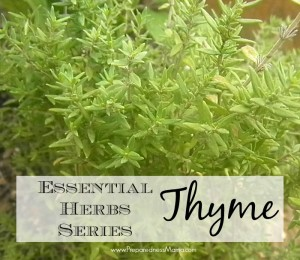 The 20 Essential Herbs to have in your garden: Thyme   PreparednessMama