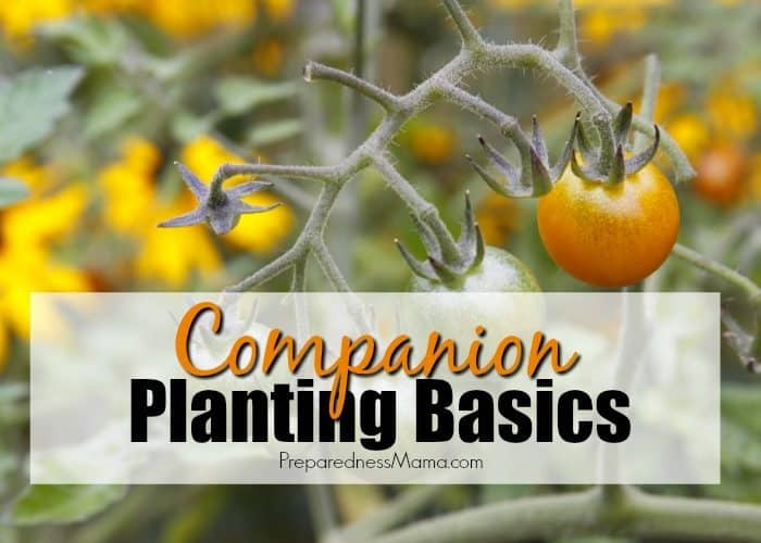 Companion Planting Basics