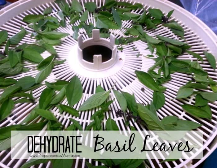 how to preserve basil