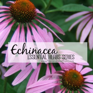 Echinacea - Part of the essential herbs to have in your garden | PreparednessMama