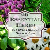 The Essential Herbs Series: 20 M ust Have Herbs for Every Garden #16-20   PreparednessMama