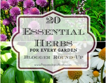 Essential Herbs Series – Herb Blogger Roundup