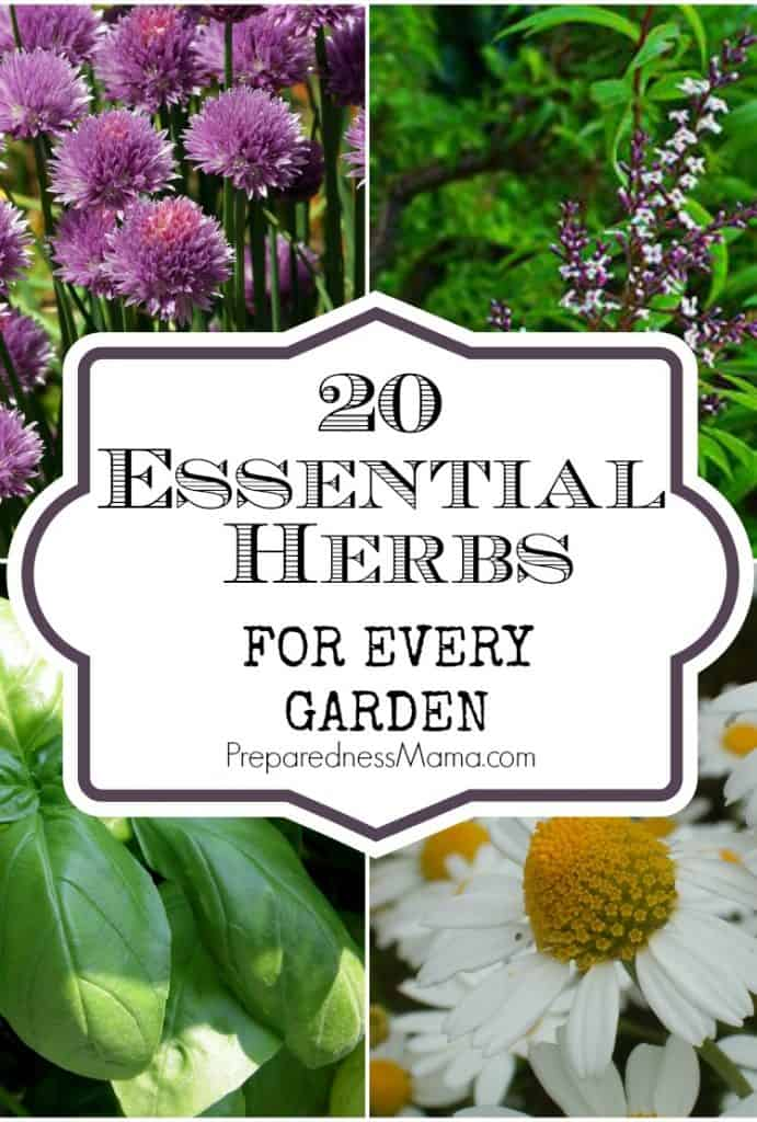 20 Essential herbs for every garden | PreparednessMama