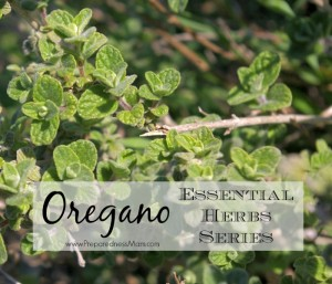 Oregano is one of the 20 essential herbs to have in your garden |PreparednessMama