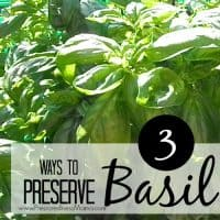 3 Ways to Preserve Basil for Home Use | PreparednessMama