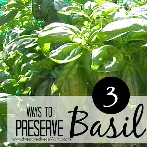 3 simple ways to preserve basil after the harvest. Learn to make basil & olive oil cubes for quick saute, salt dried basil, and get dehydrating instructions | PreparednessMama