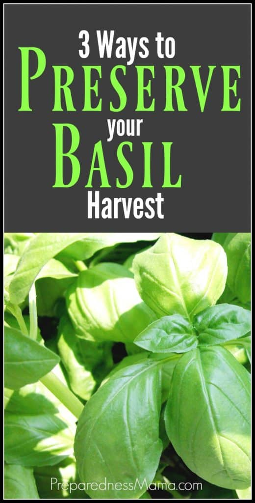 3 Ways to preserve your basil harvest | PreparednessMama