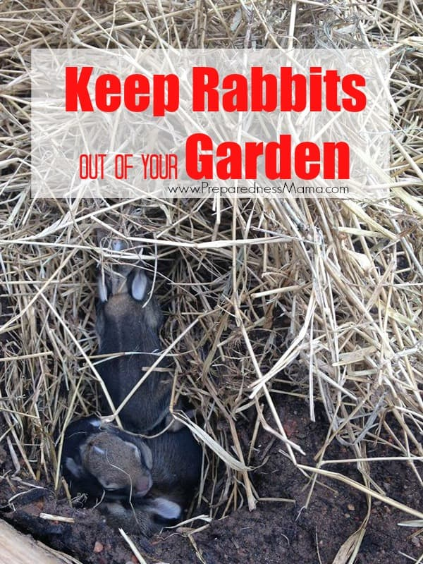 8 Ways to keep rabbits oput of your garden on Front Porch Friday 64 | PreparednessMama.com