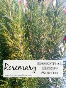 20 Essential Herbs for your yard: Rosemary   PreparednessMama