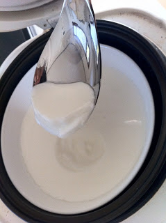 Yogurt in a rice cooker - Photo courtesy of Knifing, Forking, Spooning | PreparednessMama