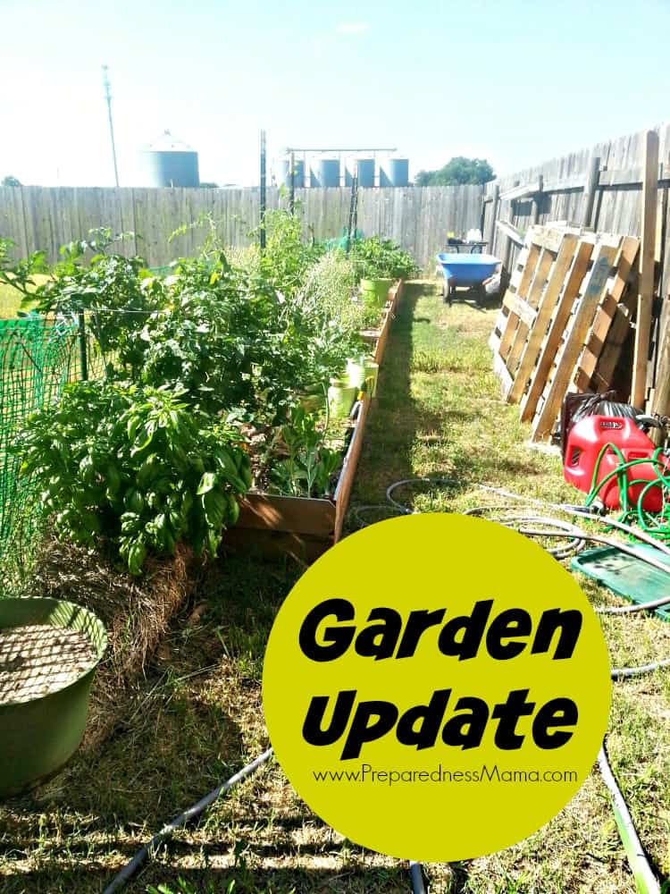 Before and after garden from scratch | PreparednessMama