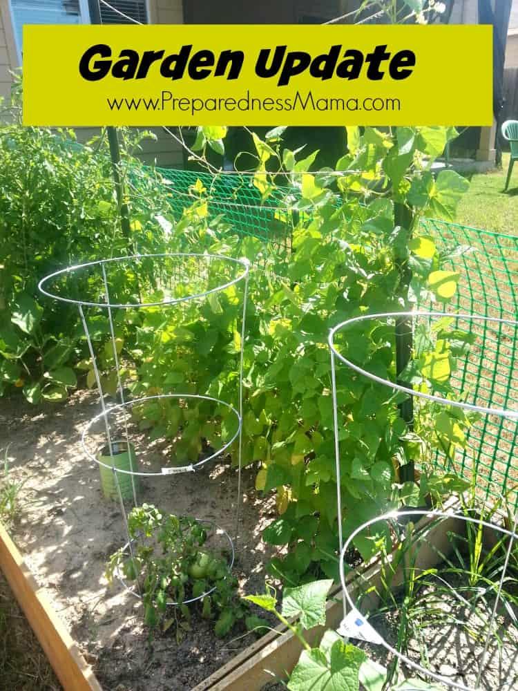 Beans and tomato in the new garden plot | PreparednessMama